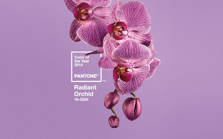 radiant orchid Pantone 2014 color of the year